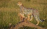 Lsping Puzzle 500 Piezas Animales Guepardos-Cachorros-Tres 52x38cm
