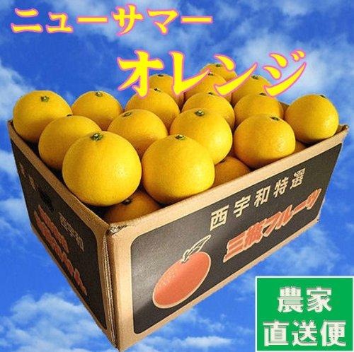 日向夏 4.5kg(訳あり・家庭用)ニューサマーオレンジ 農家直送 別名 小夏 ひゅうがなつ ニューサマーオレンジ