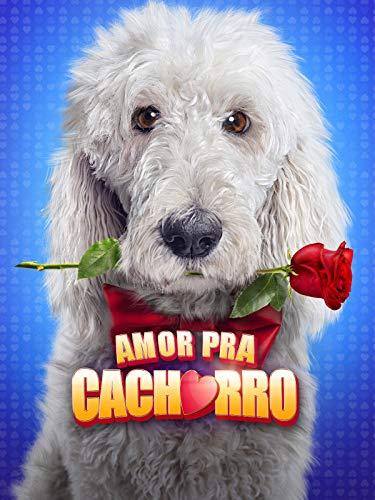 Amor Pra Cachorro