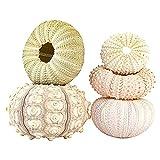 Zuoox Shell Conch Coquillage - Huevo de mar, aire de piña, decoración marina (5 unidades)