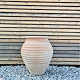 Ceramica Kreta | Anfora in terracotta fatta a mano | Resistente al gelo e di alta qualità | 50 cm | Grande attrattiva / decorazione per esterni / giardino / casa Ficus