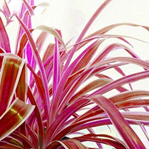 graines de fleurs petites graines de cataire chaton herbe de blé bonsaï 100 PCS / sac d'emballage d'origine Pots jardin Bonsai Décor