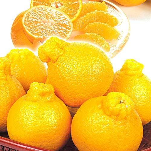 国華園 食品 和歌山産 有田のデコ 5�s1箱 柑橘