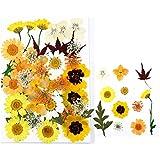Fiori secchi, 111 pezzi di fiori secchi pressati foglie naturali pressati crisantemo margherita fiori per scrapbooking fai da te candela decorazione resina gioielli artigianato creazione