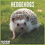 Hedgehogs 2021 Calendar: Official Hedgehog Wall Calendar 2021, 18 Months
