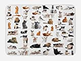 Alfombrilla de baño para amante de los gatos, grupo de gatos y gatitos con siameses noruegos, felpa para decoración de baño con respaldo antideslizante, 75 x 17,5 cm, color gris marigrosa y blanco