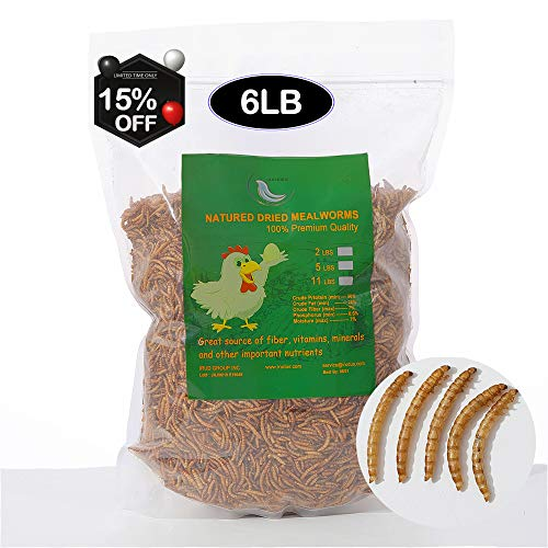 Euchirus 6LBS Non-GMO Dried Mealworms for Wild Bird Chicken Fish,High-Protein,Large Meal Worms