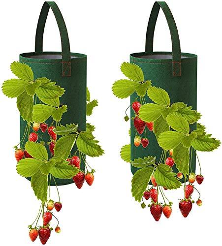 Movein Hängender Erdbeere Pflanzsack für Erdbeerpflanze 2 Grüne Elsbeere Pflanzen Tasche.