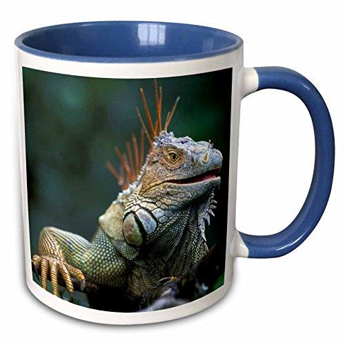 3dRose 87260_6 Costa Rica, Muelle San Carlos, Iguana Lizard-SA22 PSO0005-Paul Souders taza azul de dos…