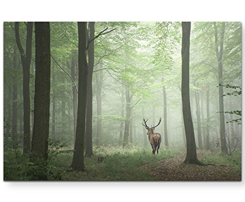 Paul Sinus Art Leinwandbilder | Bilder Leinwand 120x80cm Hirsch im Wald