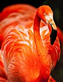 N\A Puzzle Jigsaw Puzzles 500 Piece - Flamenco Naranja - For Adult