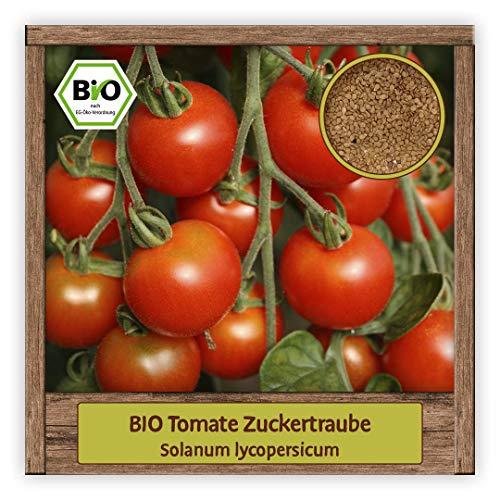 BIO Tomaten Samen Cherrytomaten Saatgut Gemüsesamen Sorte Zuckertraube
