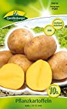 Quedlinburger 84016 Kartoffel Gala (10 Stück) (Pflanzkartoffeln)