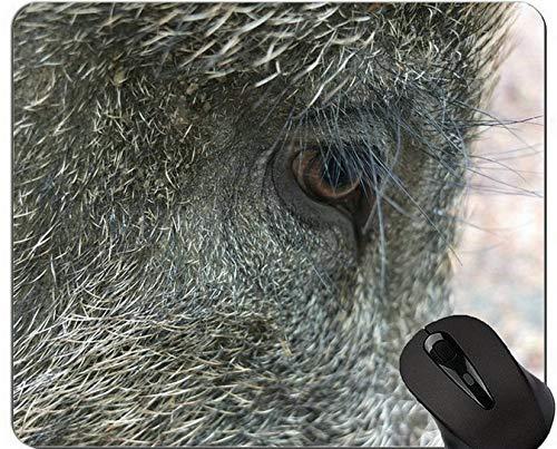 Nette Schwein-Computer-Mausunterlage, Wimper-bequeme Mausunterlage für Spiel und Büro - - Schwein (