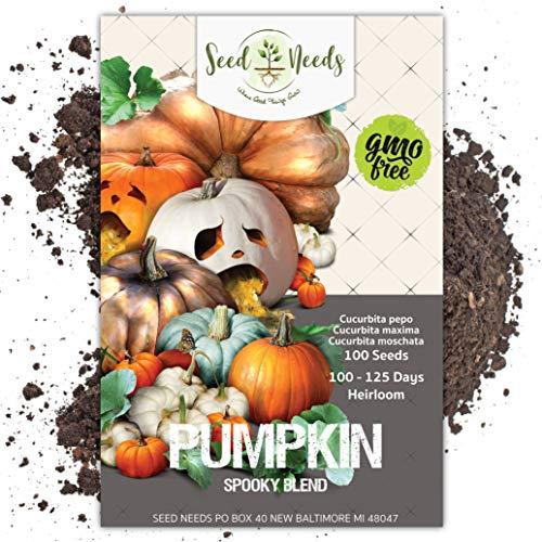 Seed Needs, Spooky Pumpkin Mixture (Cucurbita pepo / maxima) BULK Package of 100 Seeds NON-GMO