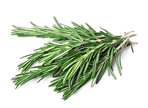 50 graines Aromatiques - ROMARIN - Rosmarinus officinalis