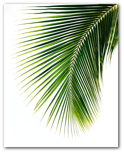 Palm Leaf Print, Abstract Tropical Leaf, 8 x 10 Inches, Unframed
