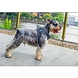 WBXNB Chaleco para Perros Arnés, Respirable del Pecho del Animal doméstico del arnés del Chaleco Super Light Duradero Anti Chafe Relleno Sin Tire una formación Adecuada para el Perro de,M