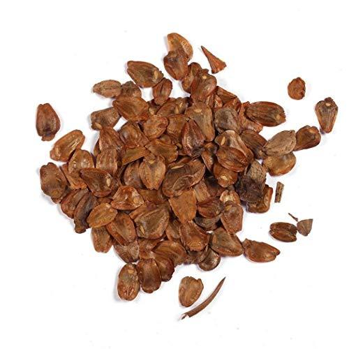 Kimilike Redwood Samen, 20 StüCke Riesenbaum KüSte Redwood Sequoia Red Cedar Pflanzensamen Garten Hof Decor, Redwood-Red Cedar Samen, Redwood Samen Und MehrjäHrige