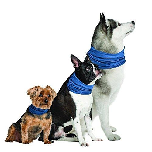 K9 Chill Collar refrigerante para Perro, Azul, Large/Xlarge 20' - 30'