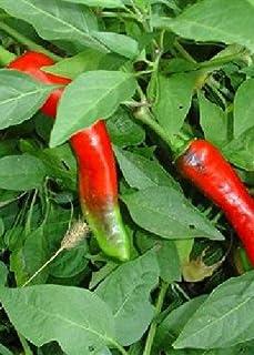 Tropica - Paprika/Chilli - Hot Portugal Capsicum annum - 10 Samen - Sehr scharf