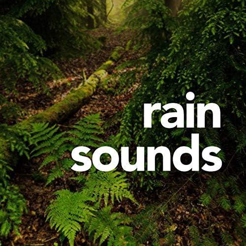 ASMR Rain Sounds