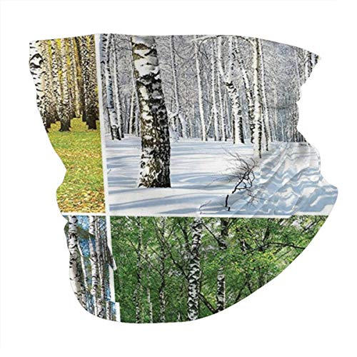 Outdoor Headband Forest Pathway In Woodland Birch Tree Jungle In The Fall Winter Spring Summer Theme Forest...