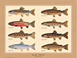 Rare Native Trout Fish Poster and Identification Chart by Joseph Tomelleri