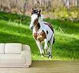 Vlies Tapete XXL Poster Fototapete Pony Pferd Schecke Farbe color, Größe 140 x 100 cm selbstklebend