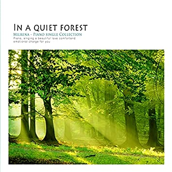 In a quiet forest