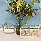 Zoom IMG-2 pianta da tavolo terrario vaso