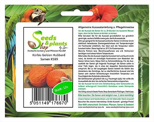 Stk - 12x Kürbis Golden Hubbard - Kürbis Samen Gemüse K589 - Seeds Plants Shop Samenbank Pfullingen Patrik Ipsa