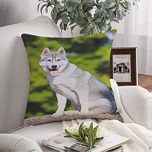 Funda de almohada decorativa suave siberiano trineo Husky pedigree adorable raza masculina...