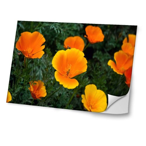 Collection 15 - Stickers voor laptop in verschillende maten - Flowers 10023-11,6 inch Skin