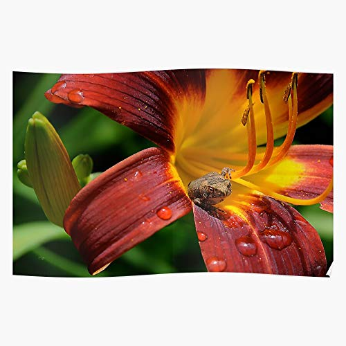 Petite Friture Yellow Frog Summer Sunlight Lily Flowers Toads Orange the best and newest poster for wall art home decor room