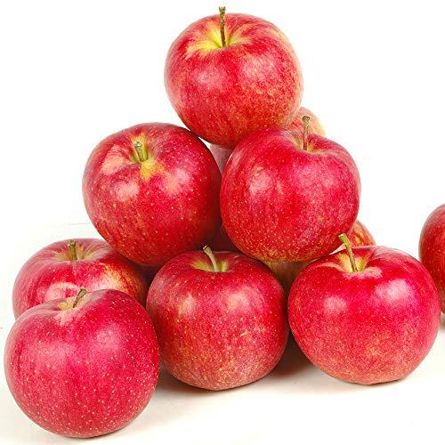 国華園 りんご 青森産 サンジョナゴールド 10kg 1箱 送料無料【2020年新物りんご・秋発送】
