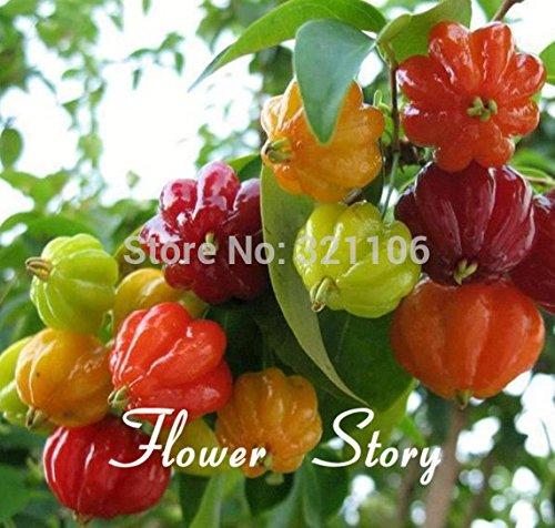 Livraison gratuite 20 chinois Seeds ornemental Pepper Couleur Mix (SHAPE spécial, Belle couleur), de plus facile, goût spécial