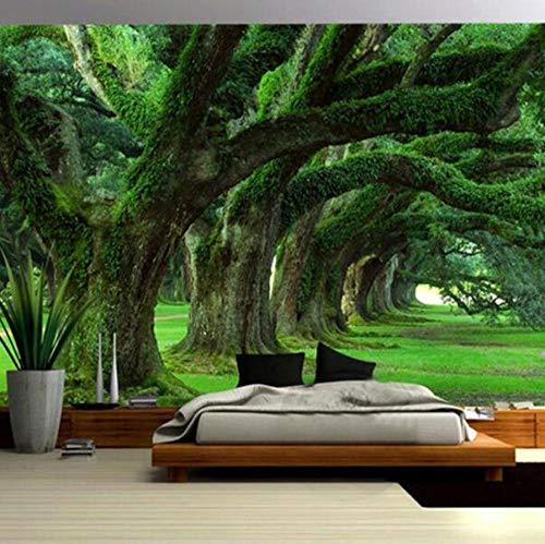 3D vliesbehang, fotovlies, premium fotobehang, ruimteuitbreiding, persoonlijkheid, wandfoto, behang, groene boom, weg, landschap, fotobehang, behang, woonkamer, restaurant, wooncultuur 250*175 250 x 175 cm.