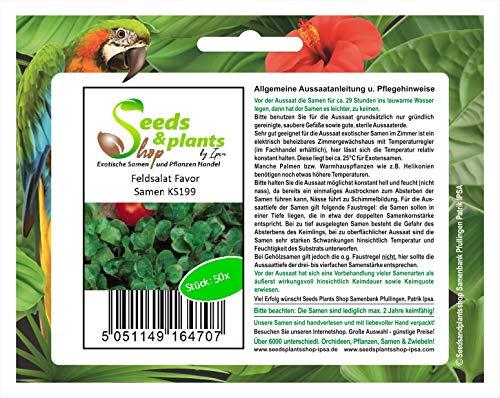 Stk - 50x Feldsalat Favor - Salat Samen Garten Gemüse Saatgut KS199 - Seeds Plants Shop Samenbank Pfullingen Patrik Ipsa