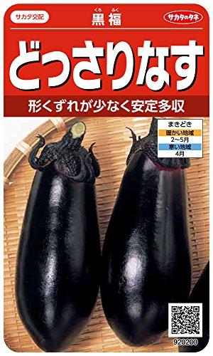 サカタのタネ 実咲野菜0200 どっさりなす 黒福 00920200 10袋セット