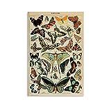 Vintage-Poster mit Schmetterlingen auf Leinwand, 20 x 30 cm