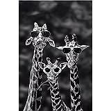 Pinturas de animales en blanco y negro Familia de jirafas divertidas con gafas de sol Carteles e impresiones en lienzo Arte de la pared Imagen de la habitación de los niños 30x50cm (12x20in) sin marco