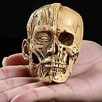 スカル装飾ギフト彫刻人体解剖学スカルヘッド筋骨格男性医療モデル解剖学医療教育スケルトン像ホームバー装飾
