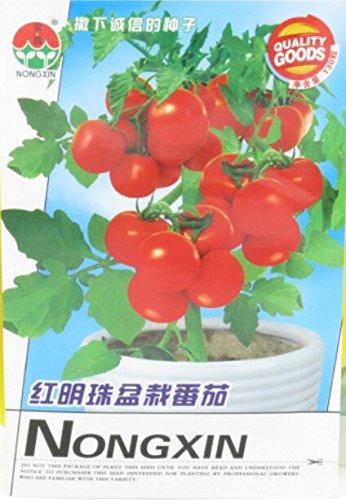 Graines Rare Bright Red Bonsai Tomate cerise Bio, emballage d'origine, 120 graines / Pack, Heirloom Plantation Indoor Tomato Fruit E3038
