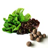 20 Mixed Romaine Seed Balls (Lettuce)- Herb & Vegetable Seed Bombs to Make Gardening Fun and Simple!