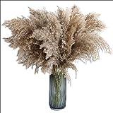 60cm Pampas Gras Getrocknete Blume Reed Hochzeit Dekoration Heu Herbst Home Natürliche Dekoration Blumenstrauß Retro Blume Getrocknete Blumen (Color : 20 Pieces, Size : 60cm)