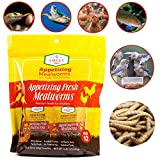 Fresh Mealworms 8.4 oz (1600 Count Total, 12 Bags) Superior to Live Mealworms - Premium Food for Leopard Gecko, Exotic Bird Food, Sugar Glider Food, Hedgehog Food -High Nutritients, No Preservatives
