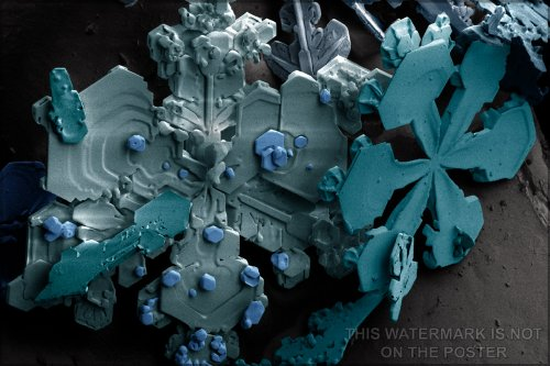History Galore 24'x36' Gallery Poster, Snow Highly magnified by a Low-Temperature scanning Electron Microscope (SEM)
