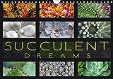 Succulent Dreams (Wall Calendar 2020 DIN A4 Landscape): Beautiful portraits of selected succulents (Monthly calendar, 14 pages ) (Calvendo Nature)