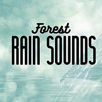 Forest Rain Sounds
